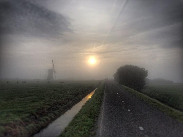 Boerenkool uit Voorhout