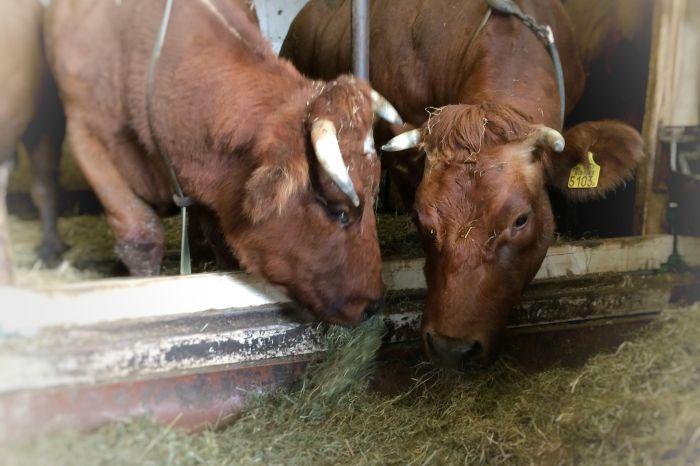 Goedleven rundvlees uit Voorhout